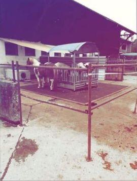 Bild 4 - Offenstall Pferdeboxen zu vermieten - Nenzing