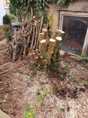 Nuss Holz