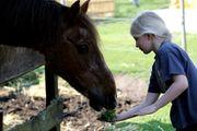 Traumreise Ponyhof - Kinderaktion Ponyhof Borstel