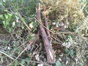 Brennholz Gestrüpp und Baumreste zu