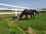 Offenstallplatz für Pferde Ponys