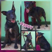 Lieber Hund Rüde Happy 2