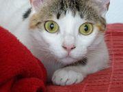 mobile Katzenbetreuung Tiersitter
