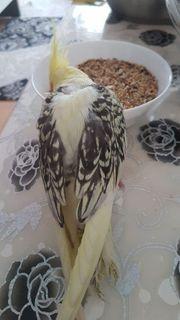 Ich habe Meine Vogel gefunden