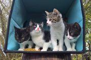 Katzen Kinder mit außergewöhnlich schöner