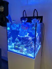 Aquamedic Cubicus Meerwasseraquarium