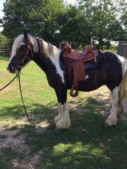 Hübscher Tinker Pony Wallach