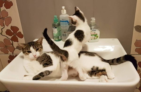 Lockdown-HomeOffice-einsam Pflegestelle für eine Katze