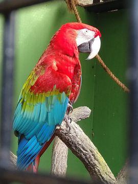 Nehme Vögel wie Sittiche Papageien: Kleinanzeigen aus Lustenau - Rubrik Tierbetreuung