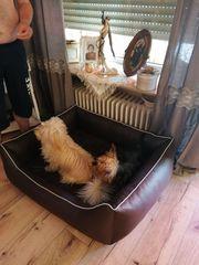 Tierbetreuung zu Hause in der