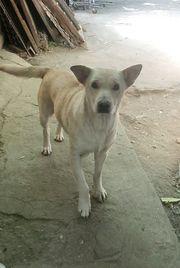 Hundemädchen KIRA sucht ein Kuschelplätzchen