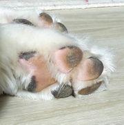Hunde- Tierbetreuung mit Herz