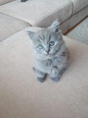 Katzenbabies BLK Kitten