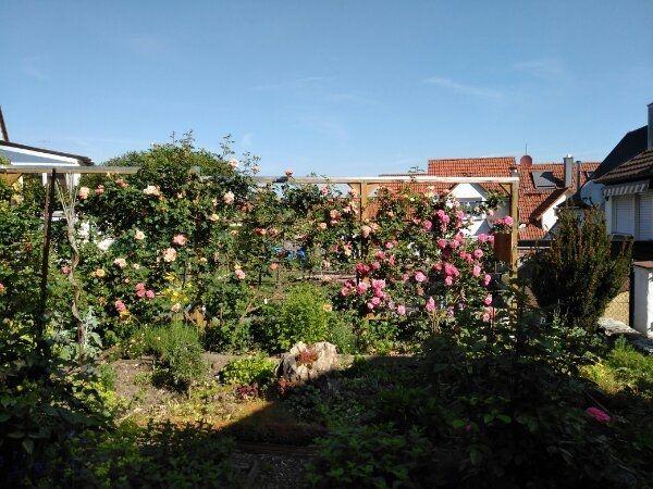 Baumschnitt Gartenarbeiten Außenanlagenbetreuung Beratung Um-