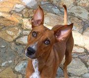 STARSKY - ein perfekter Familienhund mit