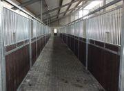 83 Pferdebox Professional Pferdestall Stall
