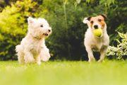 hundebetreuung katzenbetreuung