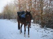 Buchgeschenk für Pilger und Pferdenarren