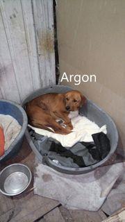 ARGON geb 2018 sucht sein