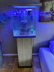 Meerwasser Aquarium kpl 80L Cube