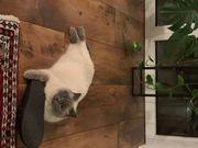 Katze vermisst in Göfis