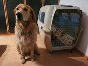 Transportbox Hund groß