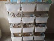 Nager Zuchtboxen T4 Makrolonboxen Nagerkäfig
