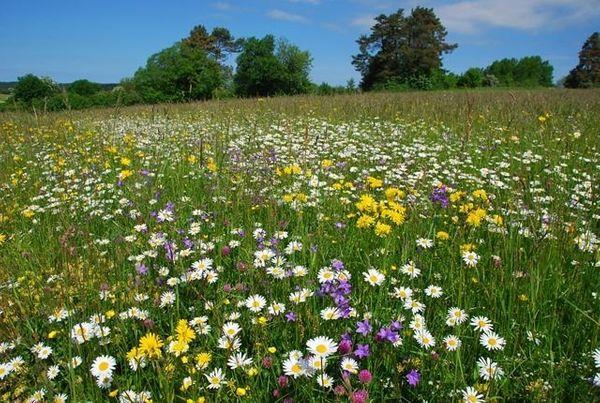 suche landwirtschaftliche Nutzfläche für Bienenzucht