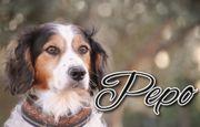 Pepo sucht sein Für-Immer-Zuhause