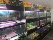 Aquarien Aquaristikzubehör Regalsysteme u v