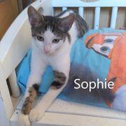 Sophie liebt ihre Streicheleinheiten