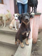 Gino - bildhübscher Hundebub auf Familiensuche