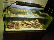 Meerwasser Aquarium 160 L