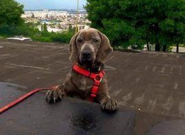 Hunde - SARINKA - ihr Leidensweg ist zu