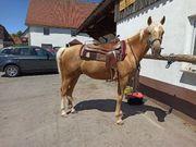 Palomino Cruzado Andalusier PRE Western