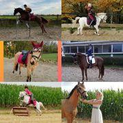 Reit Pflegebeteiligung für Pferde mit