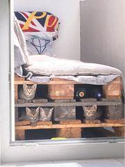 Katzen insgesamt 5 Stück