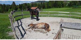 Einstellplatz zu vergeben: Kleinanzeigen aus Riefensberg - Rubrik Pferdeboxen, Stellplätze