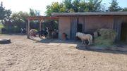 Kindergeburtstag auf dem Ponyhof