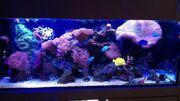 Meerwasser Lebend Gestein