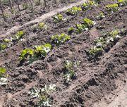 Kostenlose Gartenarbeit Gartenhilfe und Einkaufshilfe