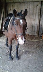 Pferde - Balsam für die Seele