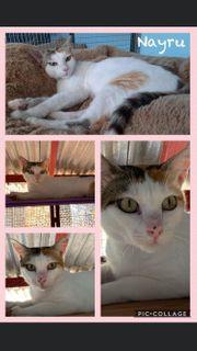 Wunderschöne Kitten Katzen und Kater
