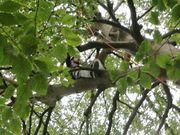 Professioneller Baumdienst zur Baum-Kronenpflege Baumkletterer