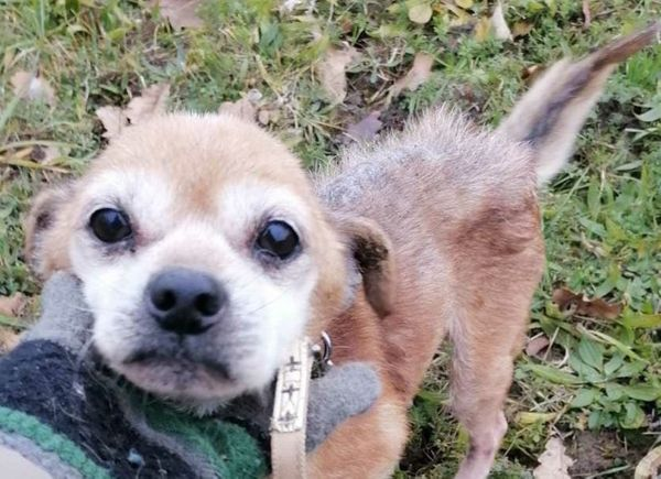 Pepe - Hunde Opi braucht dringend nette Menschen