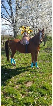 Reitbeteiligung Pferd sucht Mensch