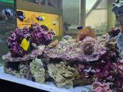 Komplettes Meerwasseraquarium 240L Maße 120x40x50