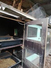 Kaninchenstall 12tlg