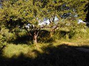 Garten- Ackergrundstücke
