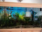 Aquarium von Juwel abzugeben